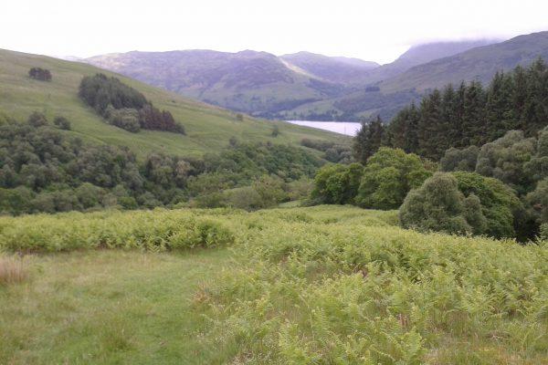 Ecological Surveys in Upland Habitat